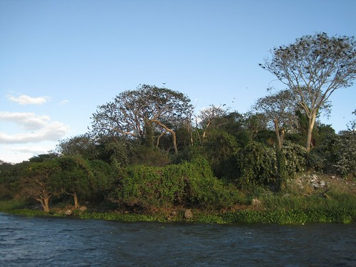 5249232673 6c5afe2518 El Salvador Spotlight   Boat Tour to Bird Island, Suchitoto