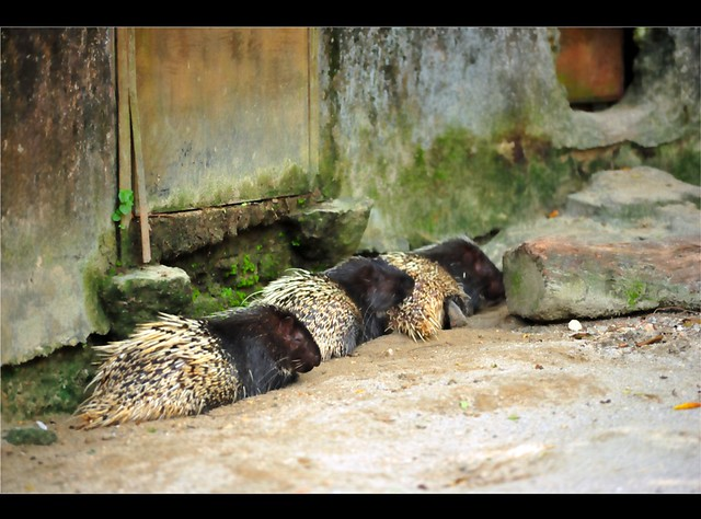 Zoo Taiping 86