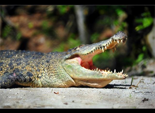 Zoo Taiping 27