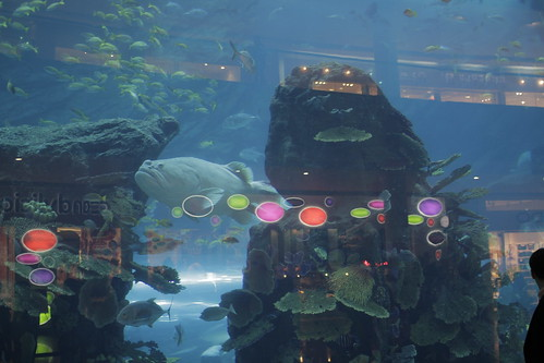 Large Aquarium in Dubai Mall 2