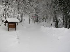 Sulla pista forestale (Emanuele Lotti) Tags: winter italy mountain trekking italia tuscany neve toscana inverno tosco montagna emiliano appennino abetone escursionismo invernale