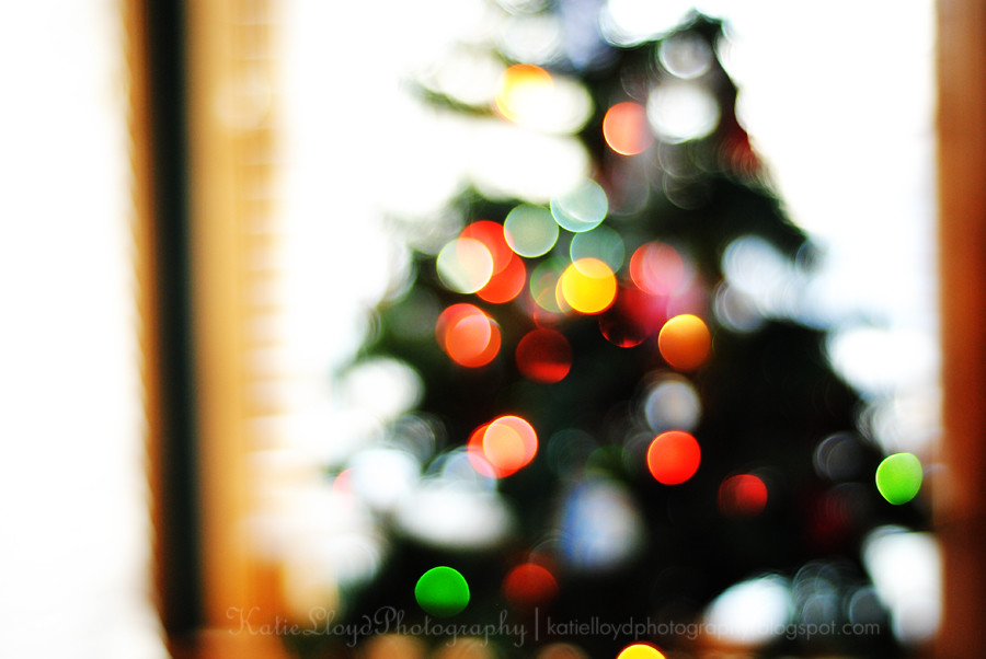 Tree-bokeh-small
