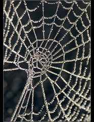 Pearls...... (Digital Diary........) Tags: morning mist cold backlight dewdrops focus web freezing dew spidersweb chrisconway