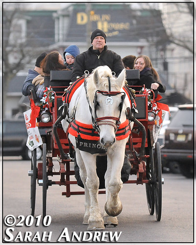 Prince the horse treats tourists to a carriage ride through the streets of