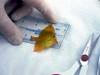 Fish analysis