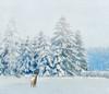 Holiday wish. (Bessula) Tags: winter snow texture christmastree deer blueribbonwinner coth bessula platinumheartaward tatot saariysqualitypictures artistictreasurechest capturethefinest photographymypassion magicunicornverybest selectbestexcellence sbfmasterpiece christmaspicturegallery
