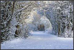 more winter walks (Janice Howell) Tags: christmas trees winter snow nature beauty field female manchester aperture flash tunnel dslr depth pennington cabon