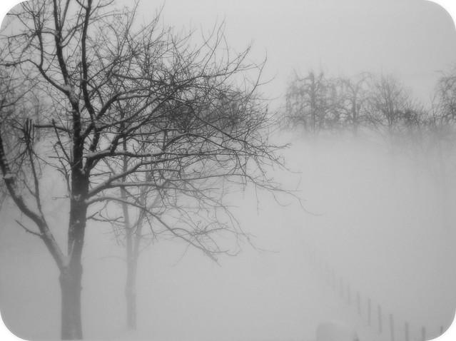 Snow & Fog