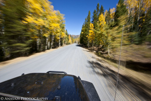 Fall Colors in Motion