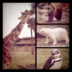 Zoo diptic