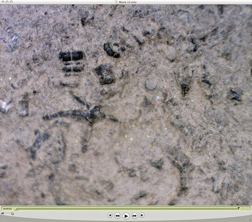 sea star and other fossils