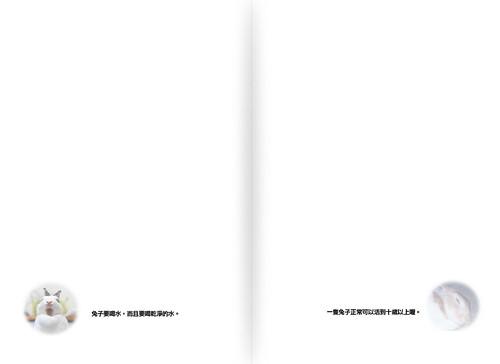 兔年。兔手冊(內頁)