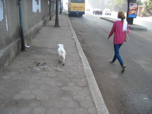 Dogwalker in Zamalek