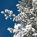 Bluebird Skies