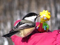 Lisa and her peeps.... (zJMac) Tags: red ontario canada birds yellow canon hair spiky hand ottawa lisa seeds chickadee sunflower glove feed simpson zjmac sx120