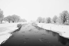 """Schwarze Elster"" (digger- on/off) Tags: schnee winter white snow black cold canon river eos magpie fluss kalt schwarz weis schwarze elster 40d"