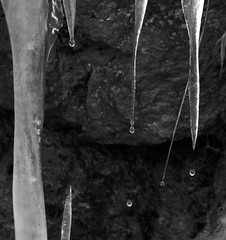 Melting (Catskills Photography) Tags: blackandwhite ice melting icicles