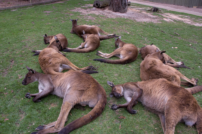 Australia (137 of 332)