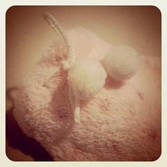 新しい 小ぶりな湯たんぽ。ソファでブランケットと一緒にコタツ風に使うんだ。