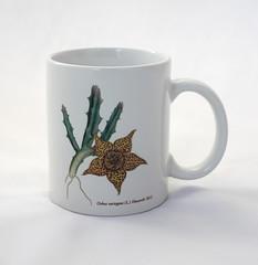 Suishoen original mug (daphne7700) Tags: orbea orbeavariegata