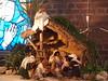 PC240592 (andersripa) Tags: christmas church angel göteborg dolls christ sweden gothenburg donkey sverige jul 2010 ängel dockor västrafrölunda åsna tynneredskyrkan jullandskap bibliskafigurer suzanaenmark chrsitmasscenes