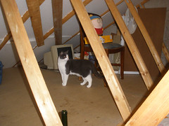 Pushy in the attic