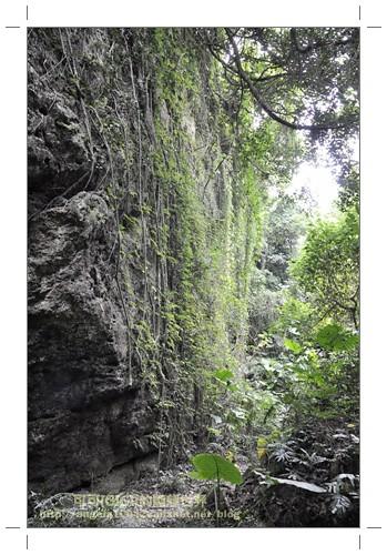 2綠色瀑布