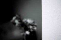 magnoliophyta (miuenski) Tags: flowers bw abstract slr film 50mm shadows dof bokeh framed textures walls canoneos kodakprofessionalbw400cn