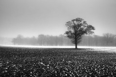 Winter Begins (Parleycoot) Tags: uk winter blackandwhite cold tree rural frosty fields staffordshire gettyimagesuklocation