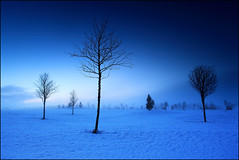 Golf in the Blue Hour (angus clyne) Tags: new old blue trees winter mist snow co