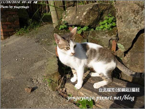 台北瑞芳(侯硐站)貓村20101128_R0016263