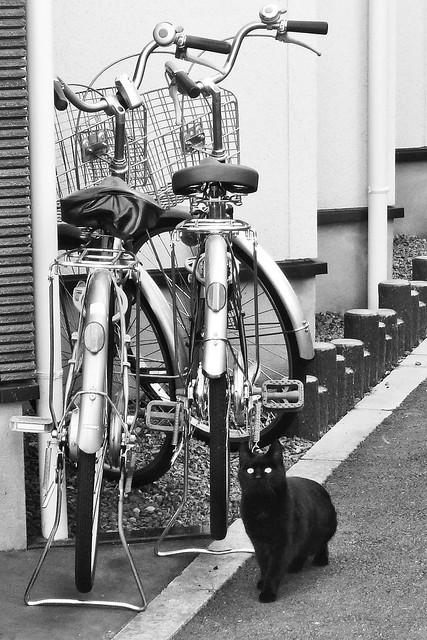 Today's Cat@2011-01-14