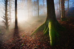 Touched by the light (Thierry Hennet) Tags: morning blue winter red sun sunlight mist tree green texture horizontal fog zeiss forest switzerland leaf suisse sony warmth sunny strength rays pure sunbeam blending 3xp exposureblending photomatix a900 cz1635mmf28