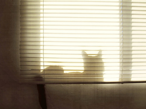 June 27, 2010: shadow kitteh