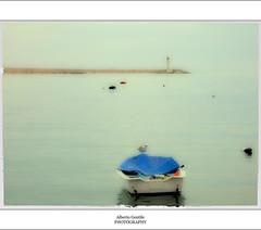 Gabbiano solo (albygent Alberto Gentile) Tags: sea canon mare gabbiano estremit canoneos5dmarkii httpballoonaprivatthumbloggercom