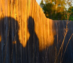 On The Fence (Shirley Buxton) Tags: fence sandiegoca bonitaca nikond7000 goldenhourphotography ourdailychallenge nikkor28300 shirleybuxtonphotography weedingoldenhour fenceingoldenhour