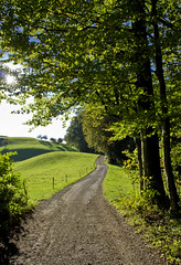 DSC06524 (Ricardo Gomez A) Tags: road autumn tree landscape arbol schweiz switzerland suiza camino paisaje otoño hirzel
