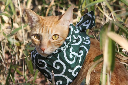 風呂敷スカーフの猫
