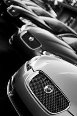Line Up (Trevor Thompson (old flickr)) Tags: auto white black car wheel mobile logo lights head tire ferrari grill jag hd jaguar rim maserati 2011 niello