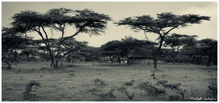 Abiata-Shala