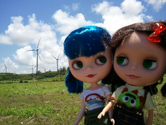 Day 33:365 Penny and Frankie at the Kahuku windmills. BL♥VED 11/365
