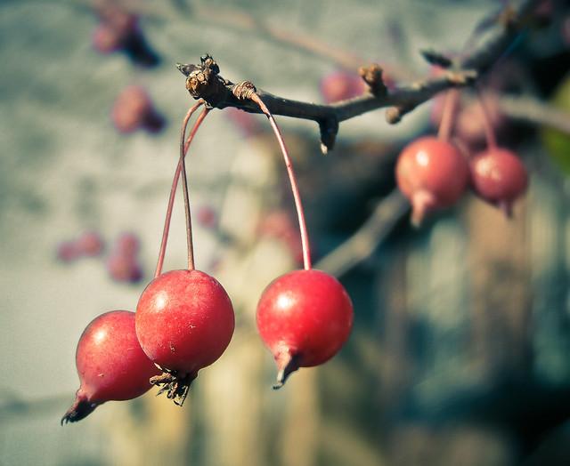 frutos de otoño (II)