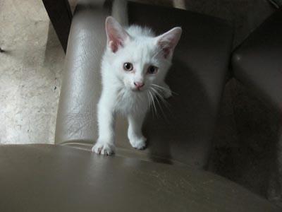 hello baby white
