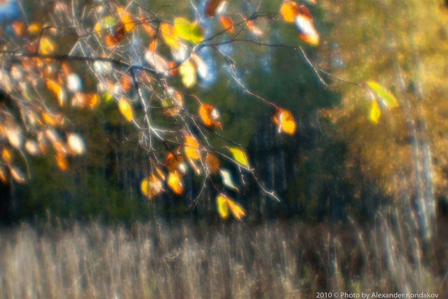 autumn 2010 © Photo by Alexander Kondakov