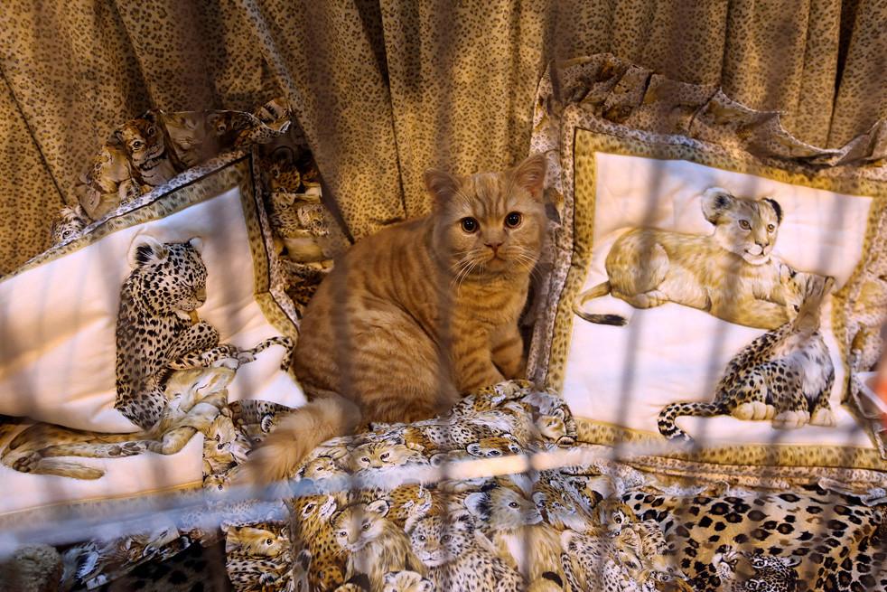 413 Выставка кошек в Англии
