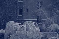 IMG_6404 (pellegrini_paris20) Tags: snowflake schnee white snow paris canon eos flake neige weiss blanc ville flocons flocon itsnows flocke flocken schneeflocke schneit flocondeneige souslaneige esschneit floconsdeneige ilneige 1000d