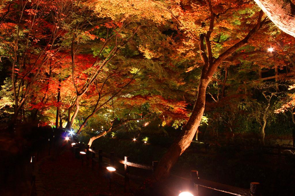 Kitanotenmangu Red Leaf Lightup 2010 (5)