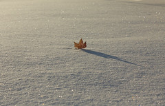 white magic (knitalatte11) Tags: winter sun snow ontario fruits leaves weeds captured fresh seeds sparkle frozenintime