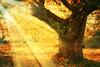 Castanheiros (XXXIV) (Transmontano) Tags: tree textura portugal photoshop arvores outono texturas textured bragança braganca embrujo vilaflor coth castaneasativa supershot castanheiro idream xoox mywinners abigfave anawesomeshot theunforgettablepictures transmontano ilustrarportugal spiritofphotography tatot dragondaggerawards artofimages magicunicornverybest magicunicornmasterpiece sailsevenseas addvf sbfmasterpiece portugalmagico magiayfotografia mygearandme ringexcellence dblringexcellence