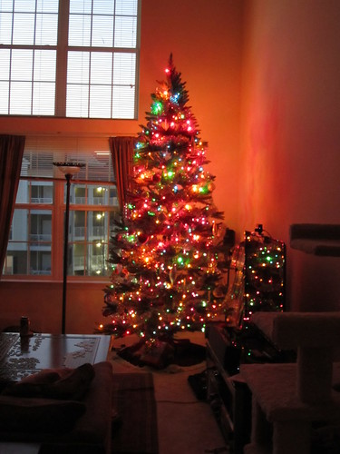 Our Solstice Tree!